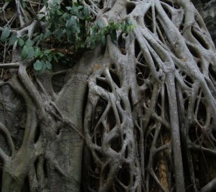 Wat Phrom, kompleks Angkor