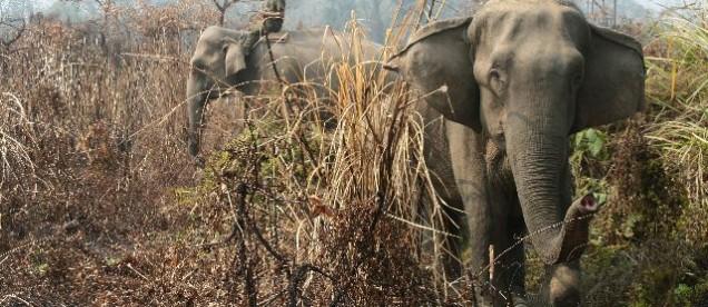 Parku Narodowy Chitwan, położonego na równinach Terai – nizinnych terenach Nepalu.