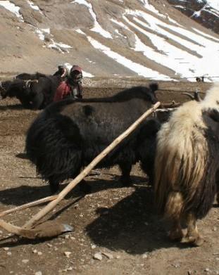 Dolina Pin, Spiti,  Stan Himachal Pradesh
