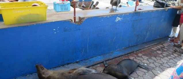 Sklep rybny Puerto Ayora