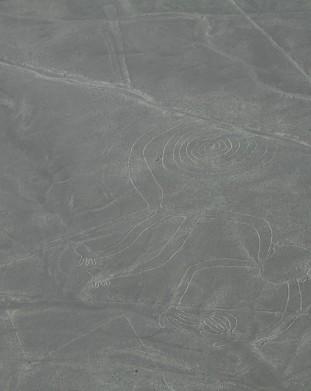 rysunki z Nazca - małpa