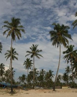 Goa, Colva