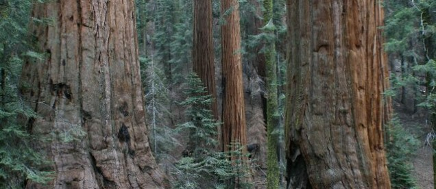 Sequoya NP - Kalifornia