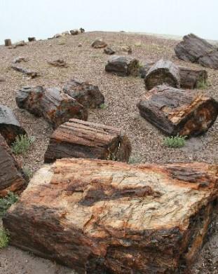 Skamieniały Las - Arizona