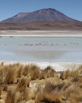 Salar de Uyuni - pustynia solna na płaskowyżu Altiplano