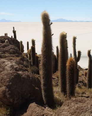 Isla de Pescado i tysiącletnie kaktusy