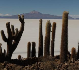 Salar de Uyuni - Isla de Pescado