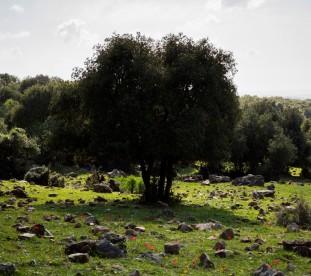 Zielona Galilea.