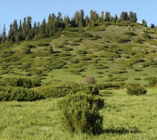 Dolina Kwiatów - niedaleko Karakol