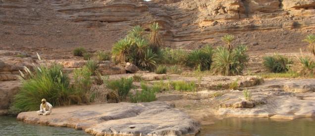 Roslinnosc i woda daja zycie na Saharze - om tramping klub