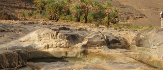 Drzewka palmowe w oazie na Saharze w Algierii - om tramping klub