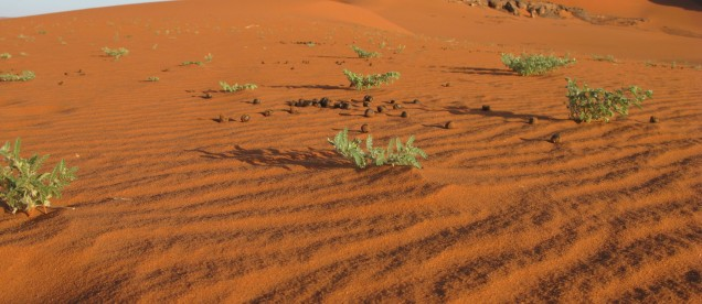 Czerwono-pomaraczowe piaski pustyni - Sahara, Algieria - om tramping klub
